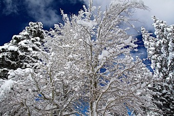 tahoe_snow