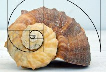 examples-of-the-golden-ratio-you-can-find-in-nature-55224